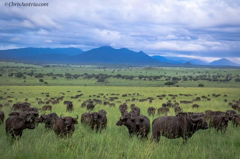 Kidepo Valley – Karamoja